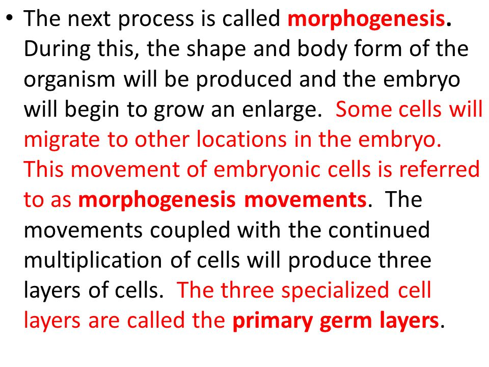 The next process is called morphogenesis