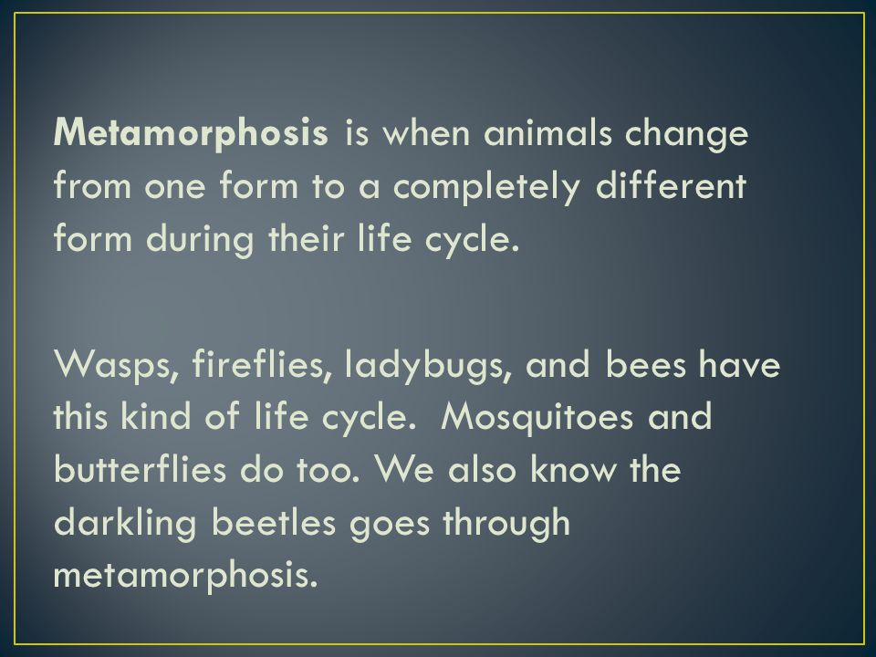 Metamorphosis is when animals change from one form to a completely different form during their life cycle.
