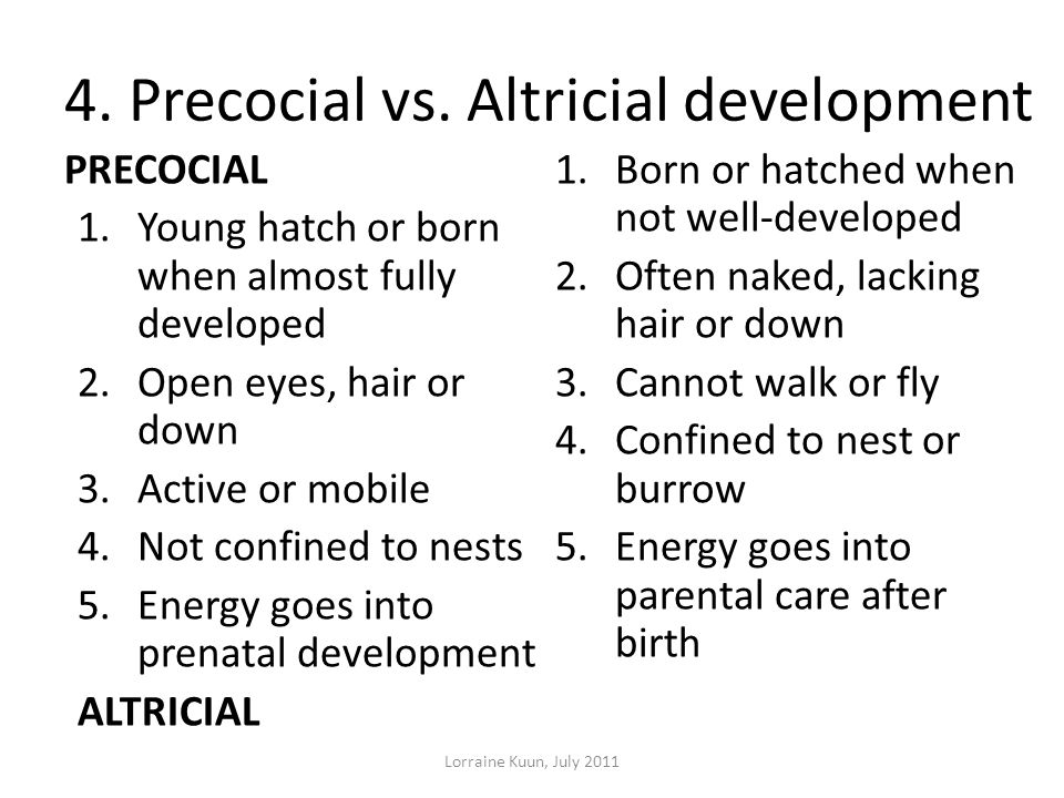 4. Precocial vs. Altricial development
