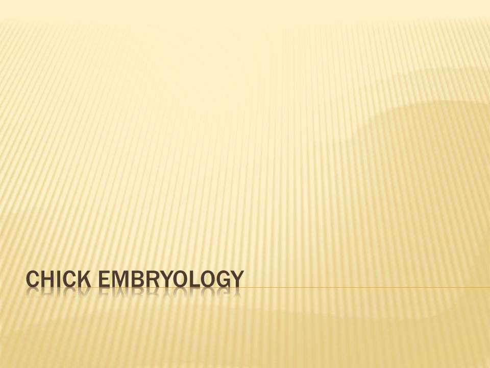 Chick Embryology
