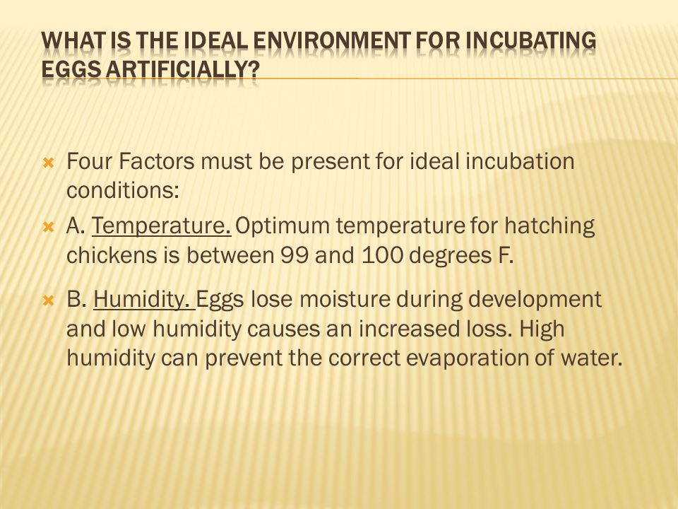 What is the ideal environment for incubating eggs artificially
