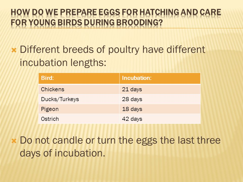 Different breeds of poultry have different incubation lengths: