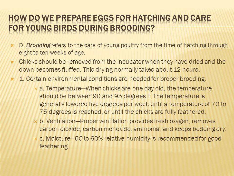 How do we prepare eggs for hatching and care for young birds during brooding