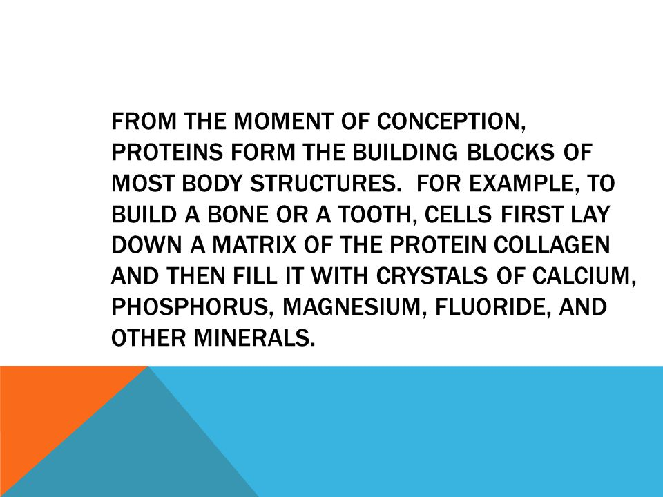 From the moment of conception, proteins form the building blocks of most body structures.