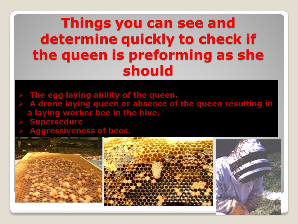 Things you can see and determine quickly to check if the queen is preforming as she should