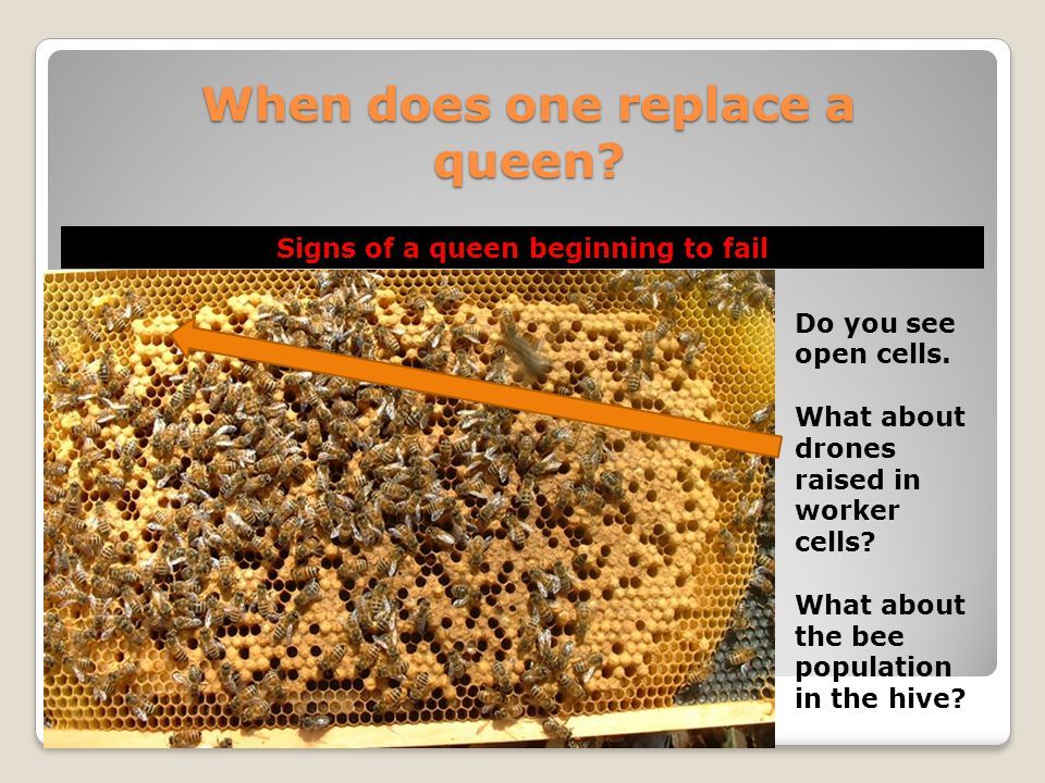 When does one replace a queen