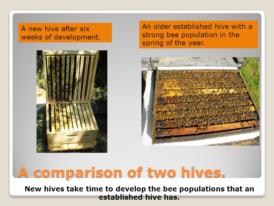 A comparison of two hives.