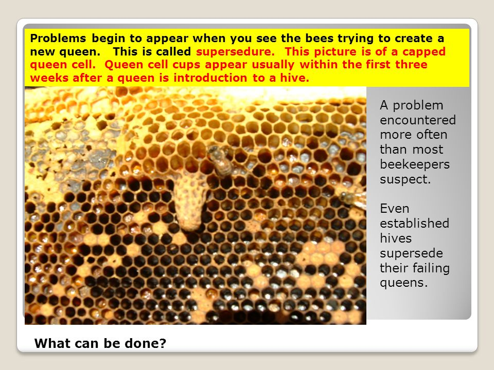 A problem encountered more often than most beekeepers suspect.