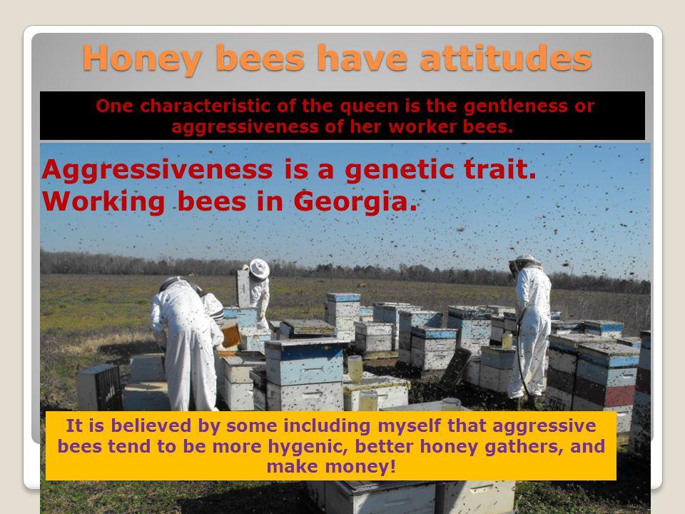 Honey bees have attitudes