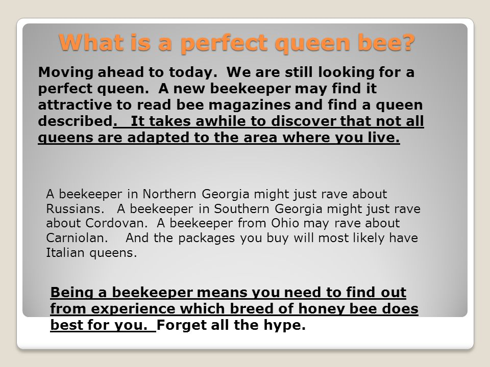 What is a perfect queen bee