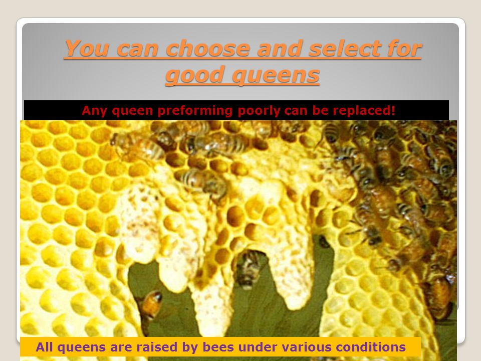 You can choose and select for good queens
