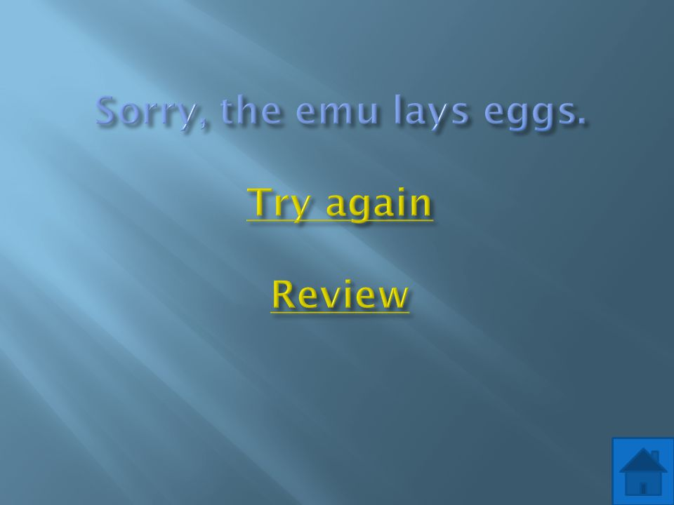 Sorry, the emu lays eggs. Try again Review