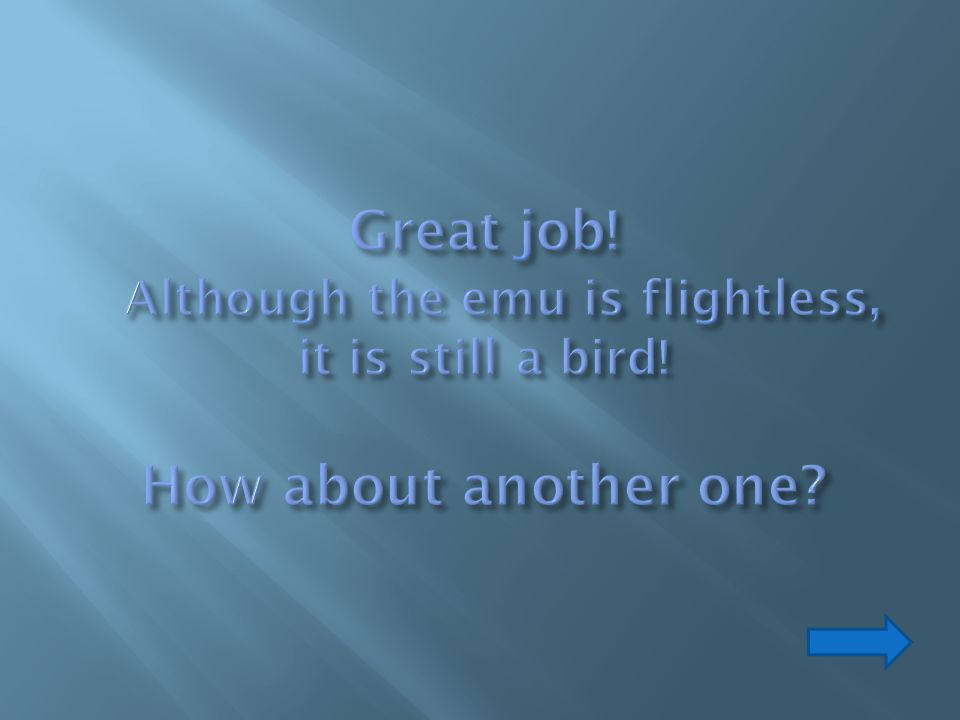 Great job. Although the emu is flightless, it is still a bird