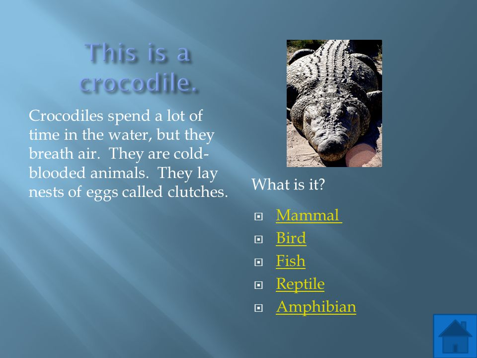 This is a crocodile.