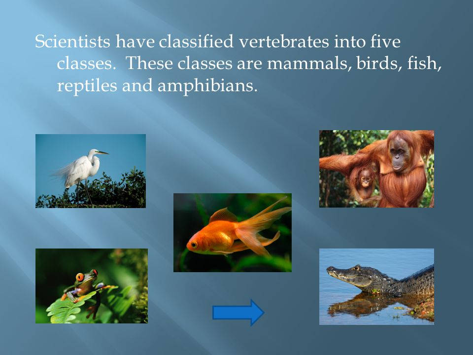 Scientists have classified vertebrates into five classes