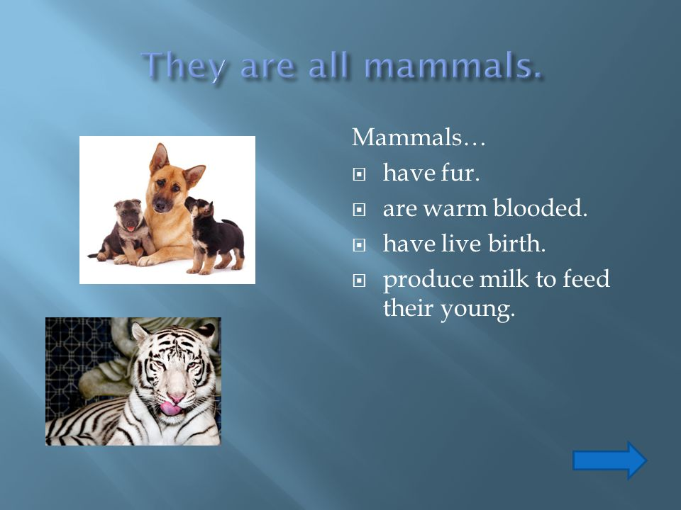 They are all mammals. Mammals… have fur. are warm blooded.