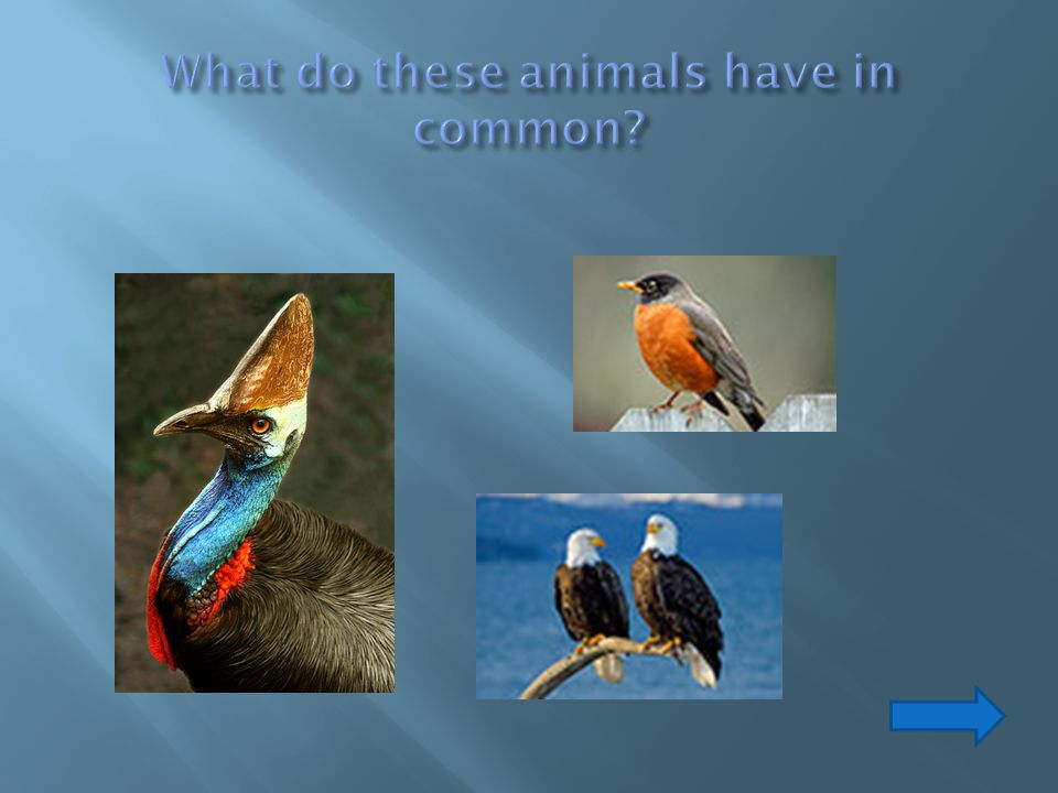 What do these animals have in common