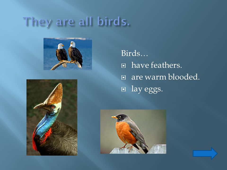 They are all birds. Birds… have feathers. are warm blooded. lay eggs.