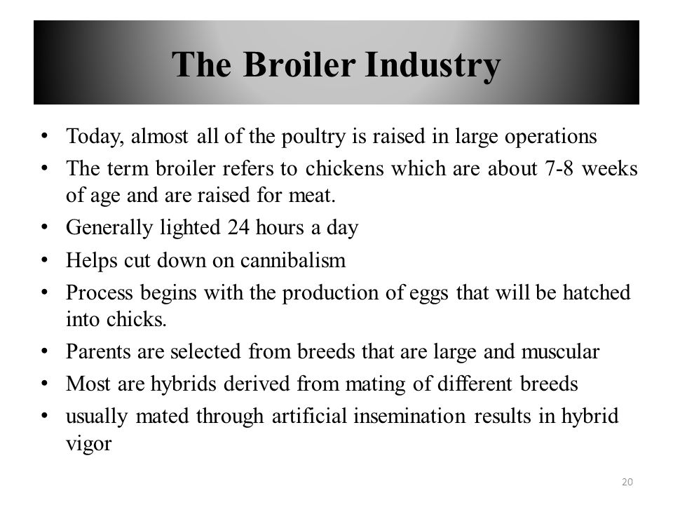 The Broiler Industry Today, almost all of the poultry is raised in large operations.
