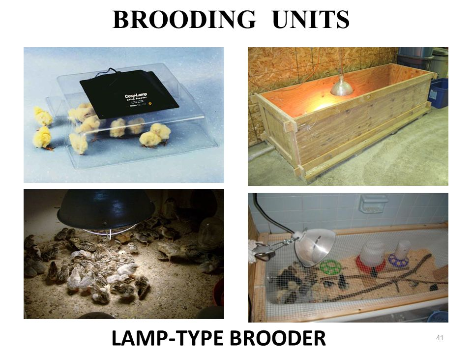 BROODING UNITS LAMP-TYPE BROODER