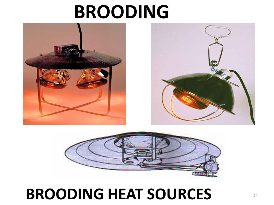 BROODING BROODING HEAT SOURCES