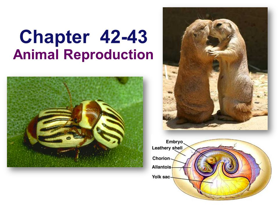 Chapter Animal Reproduction