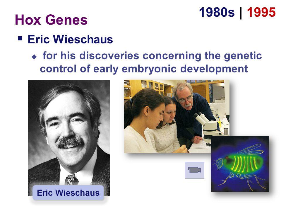 Hox Genes 1980s | 1995 Eric Wieschaus