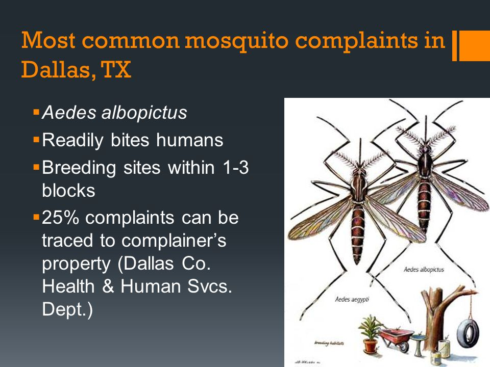Most common mosquito complaints in Dallas, TX