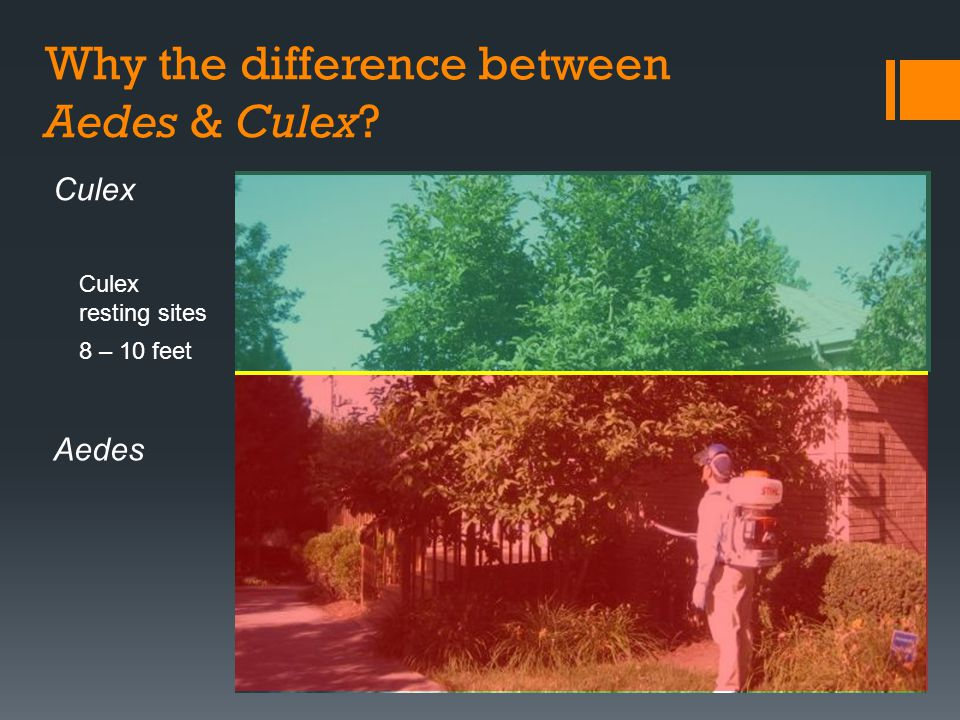 Why the difference between Aedes & Culex