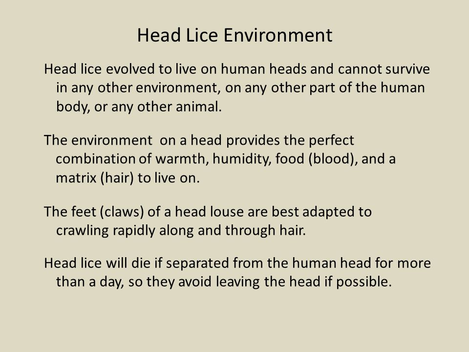 Head Lice Environment
