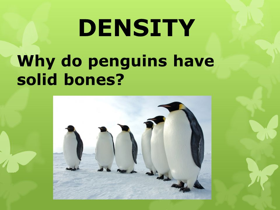 DENSITY Why do penguins have solid bones