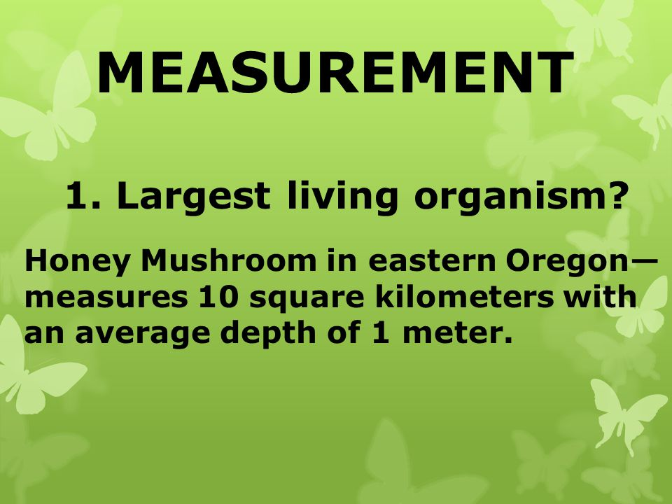MEASUREMENT 1. Largest living organism