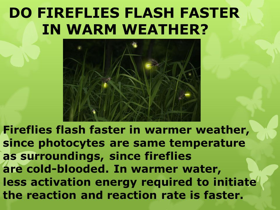 DO FIREFLIES FLASH FASTER IN WARM WEATHER