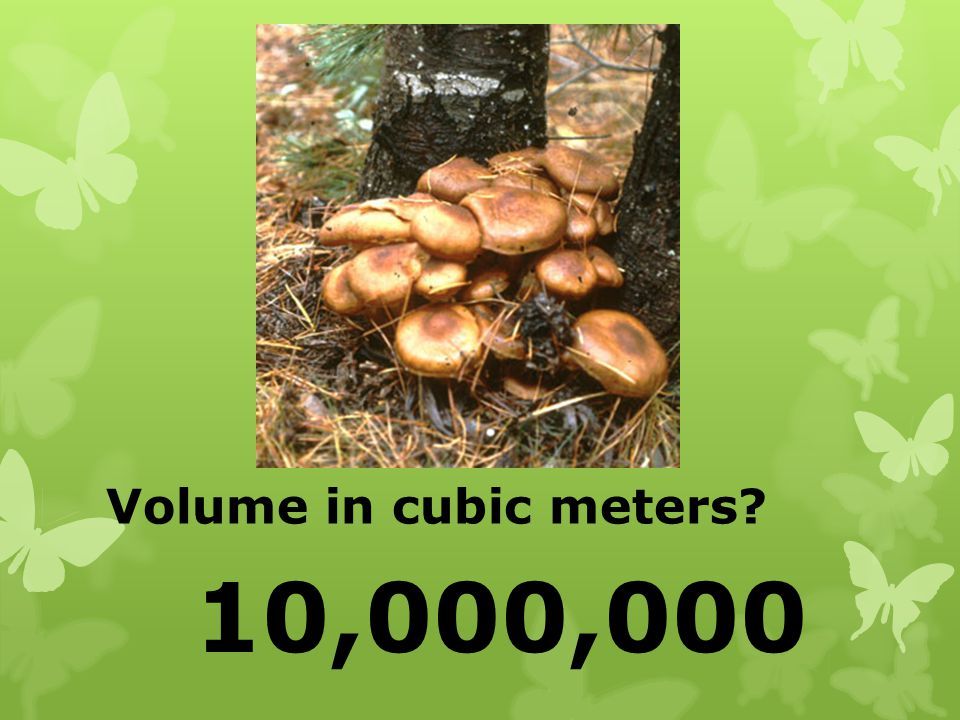 Volume in cubic meters 10,000,000