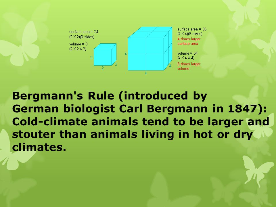 Bergmann s Rule (introduced by
