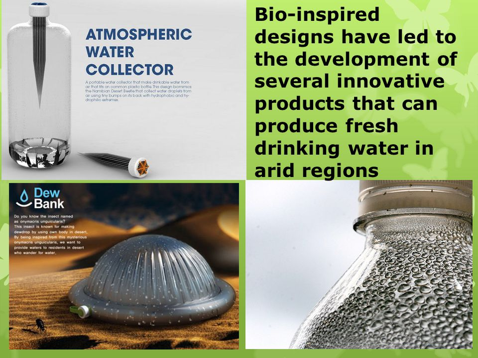 Bio-inspired designs have led to the development of several innovative products that can