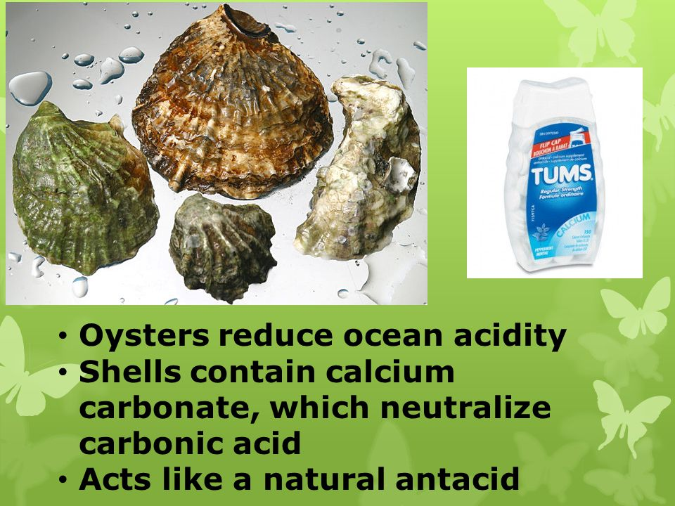 Oysters reduce ocean acidity