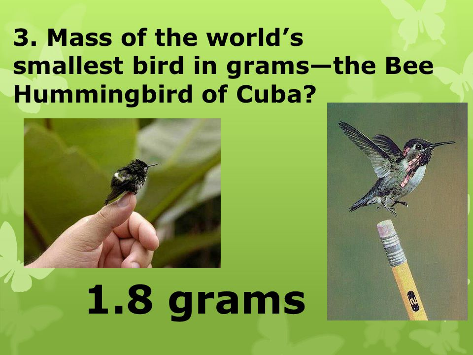 1.8 grams 3. Mass of the world's