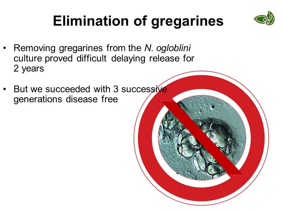 Elimination of gregarines