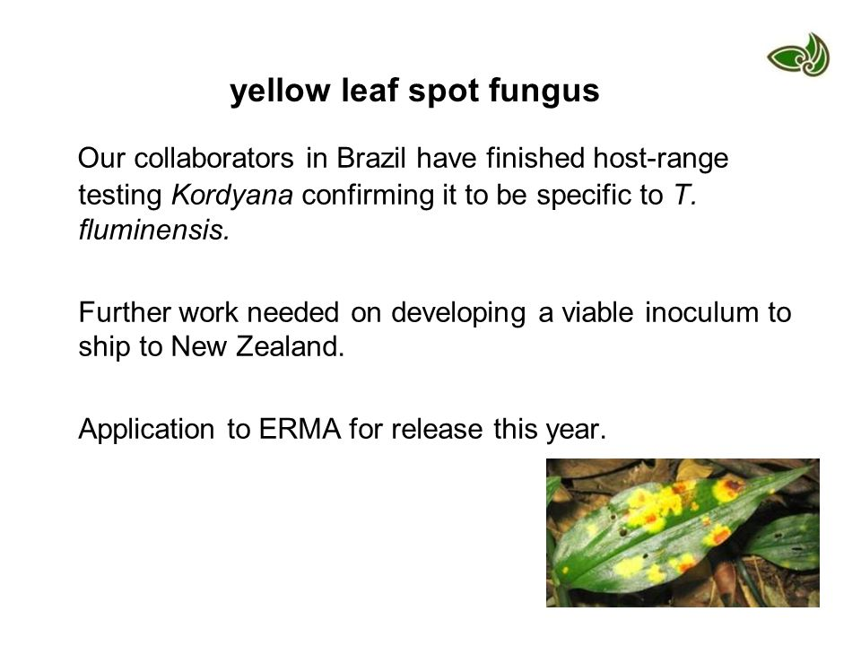 yellow leaf spot fungus
