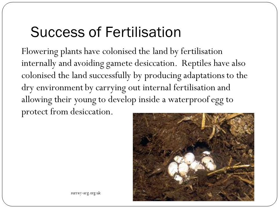 Success of Fertilisation
