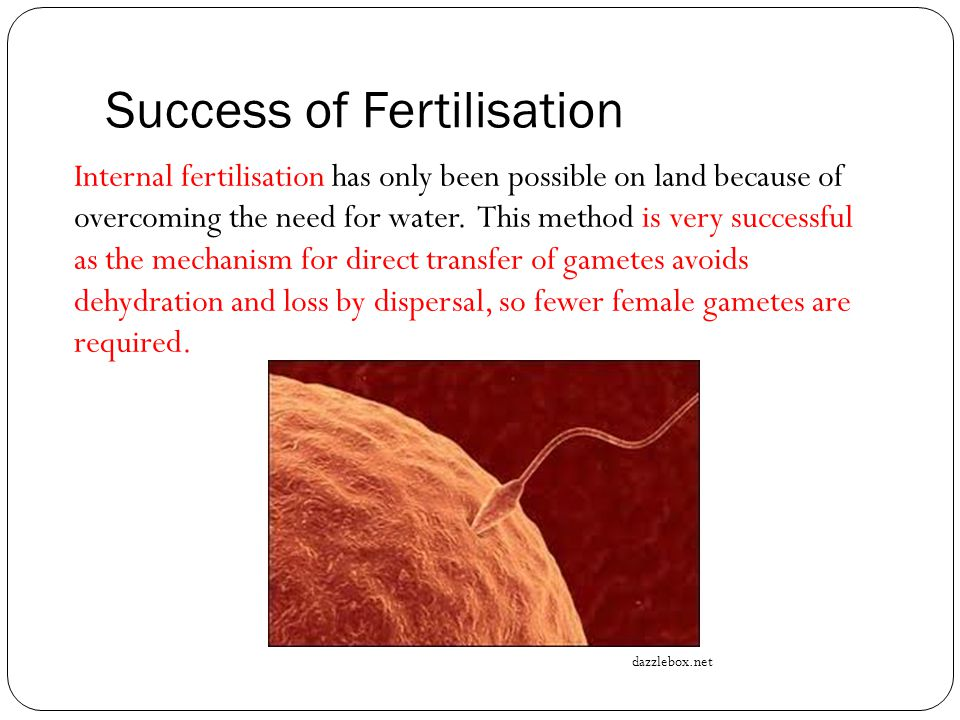 Success of Fertilisation