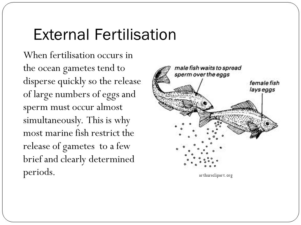 External Fertilisation