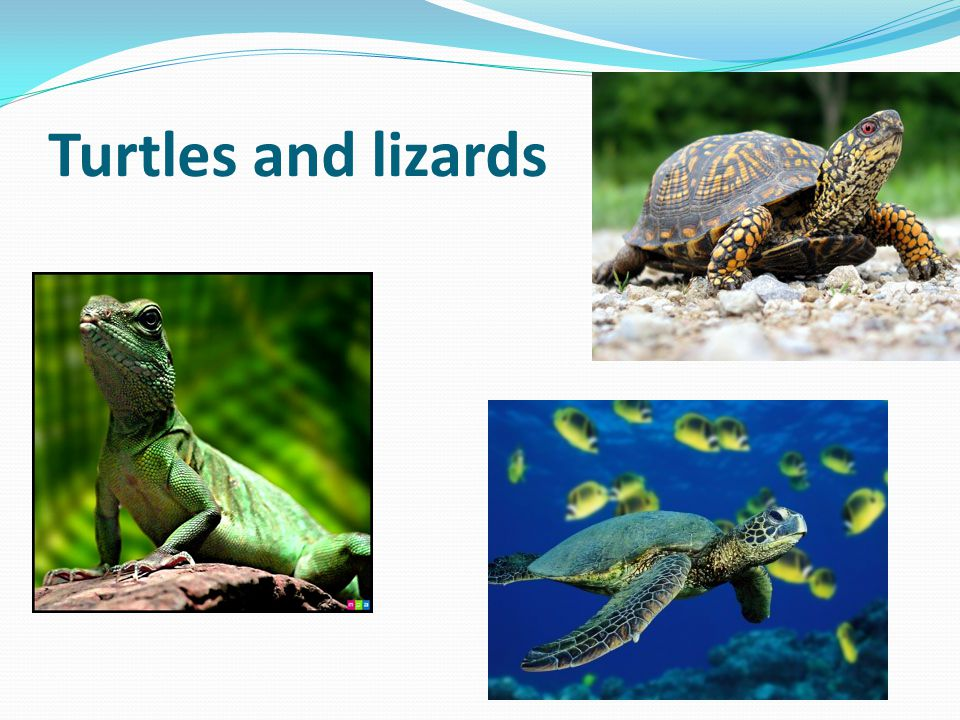 Turtles and lizards