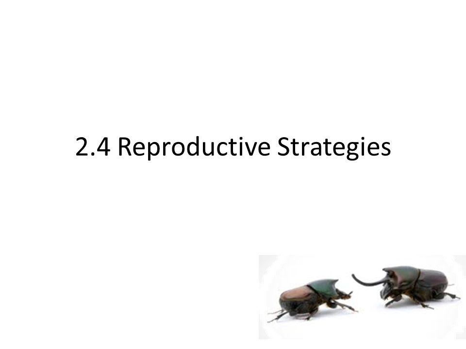 2.4 Reproductive Strategies