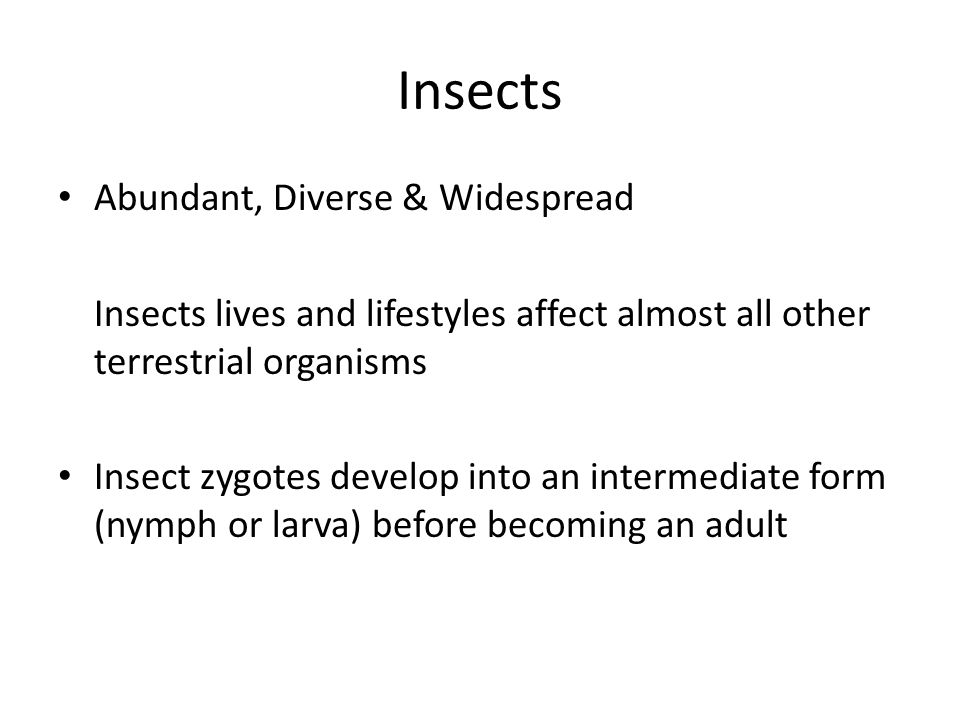 Insects Abundant, Diverse & Widespread