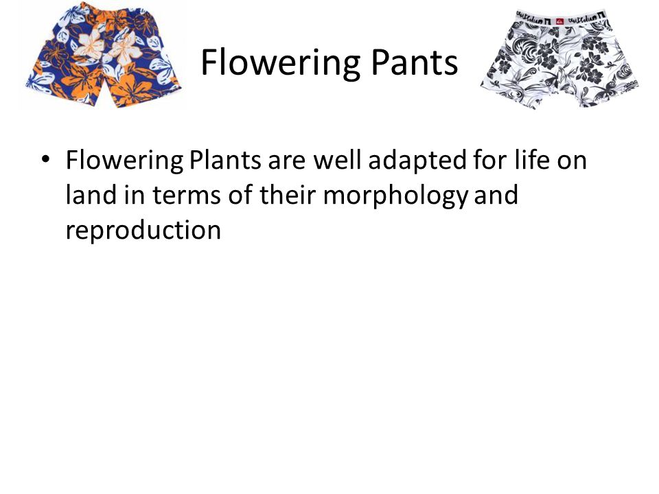 Flowering Pants Flowering Plants are well adapted for life on land in terms of their morphology and reproduction.