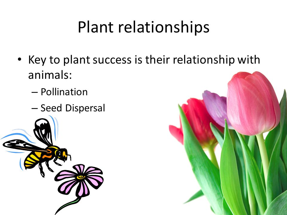 Plant relationships Key to plant success is their relationship with animals: Pollination.