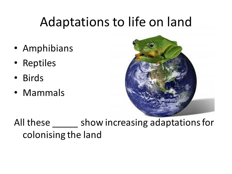 Adaptations to life on land