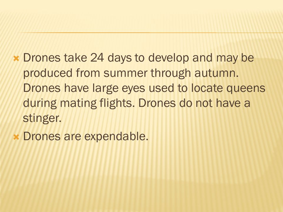 Drones take 24 days to develop and may be produced from summer through autumn. Drones have large eyes used to locate queens during mating flights. Drones do not have a stinger.